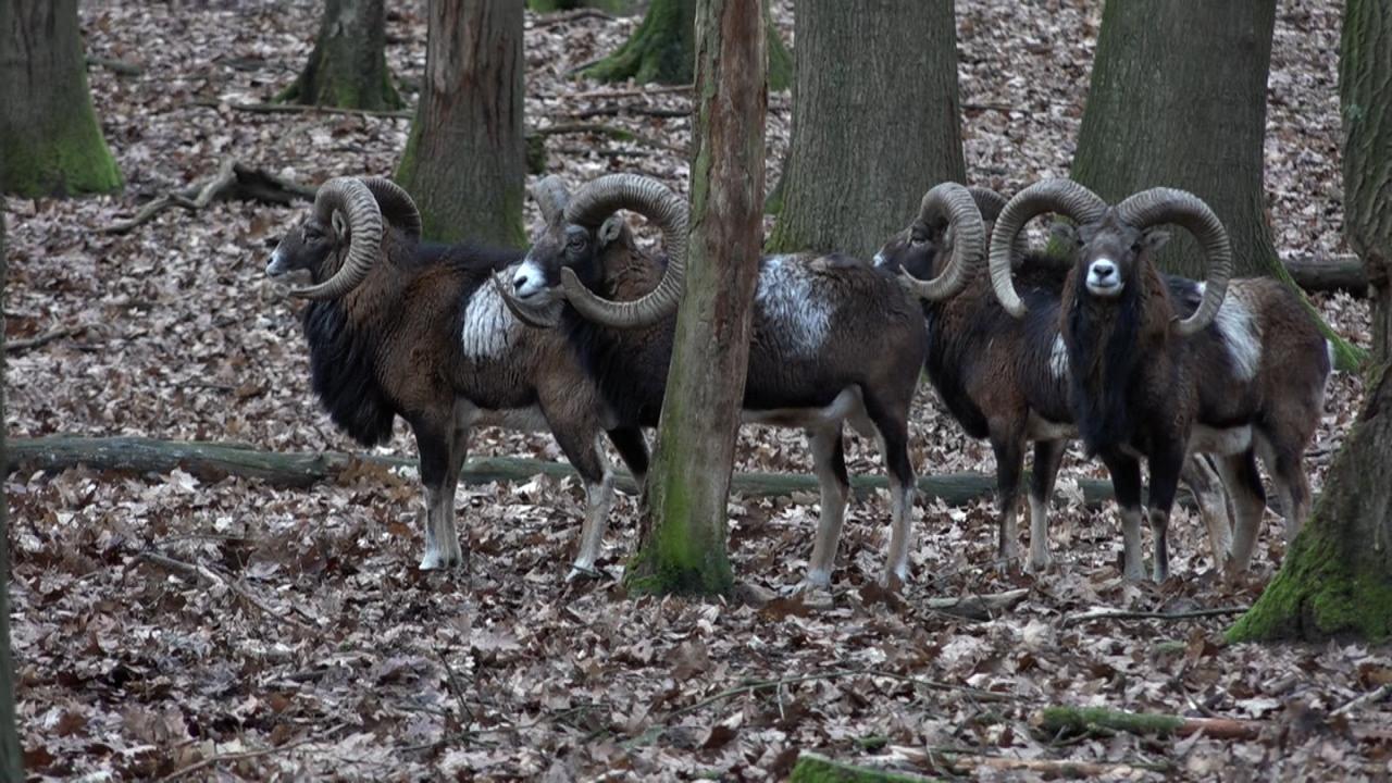 Naturwildpark Granat – Futterkosten ohne Einnahmen
