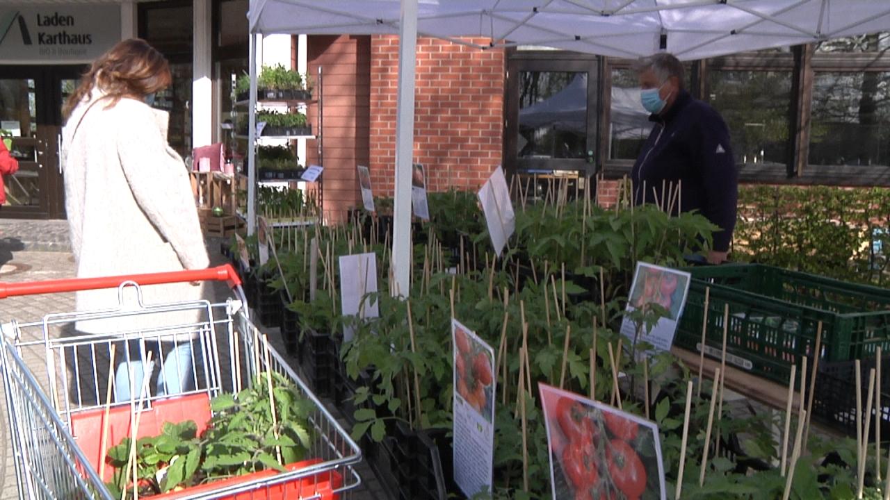 Erster Jungpflanzenmarkt an den Werkstätten Karthaus 2021